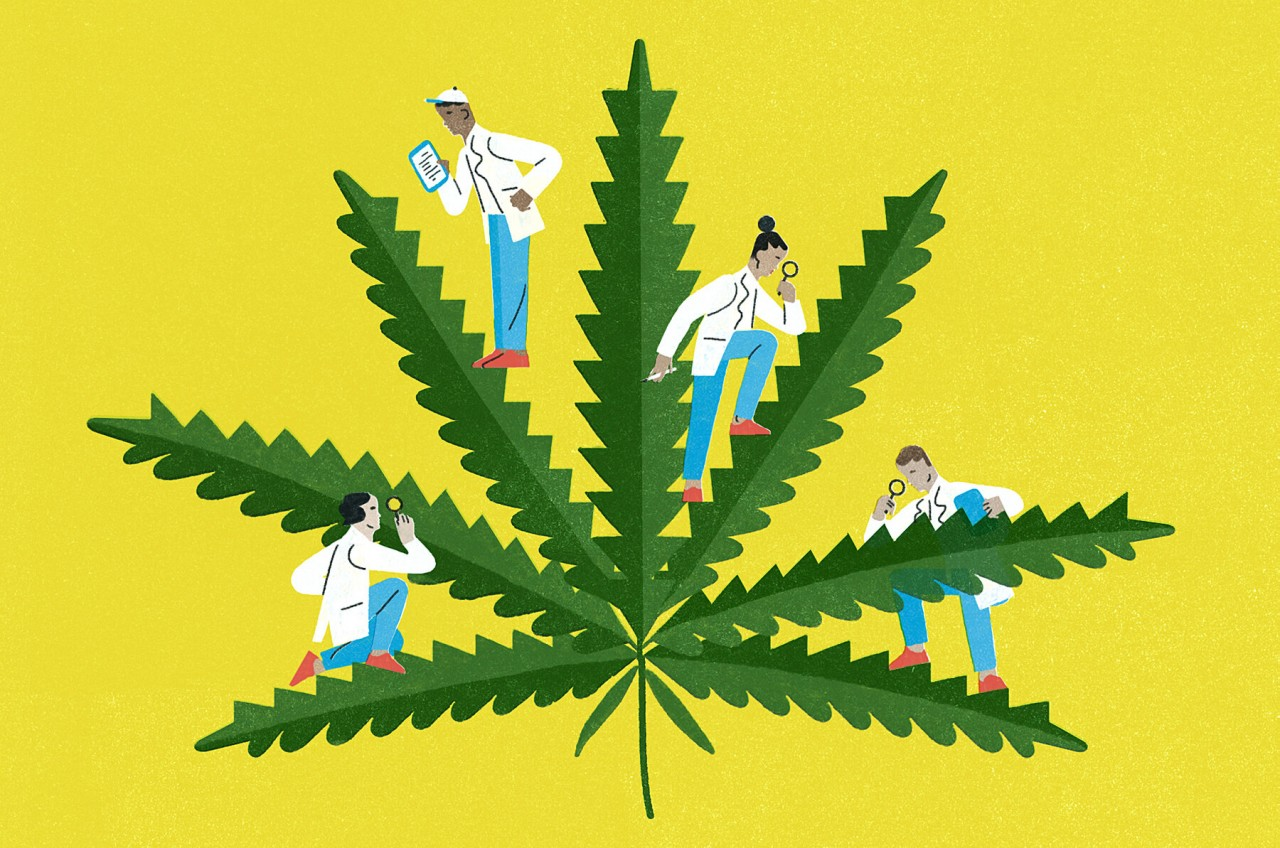4 Most Harmful Marijuana's Effects